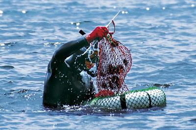 速い海流の底から海の恵みを一つ一つ拾い上げる素潜り漁